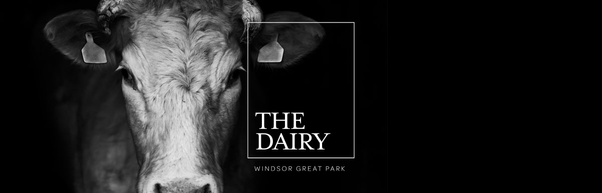 The Dairy Logo Design